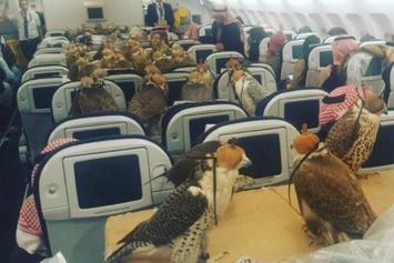 Saudi Prince Buys Plane Seats For All 80 Of His Falcons